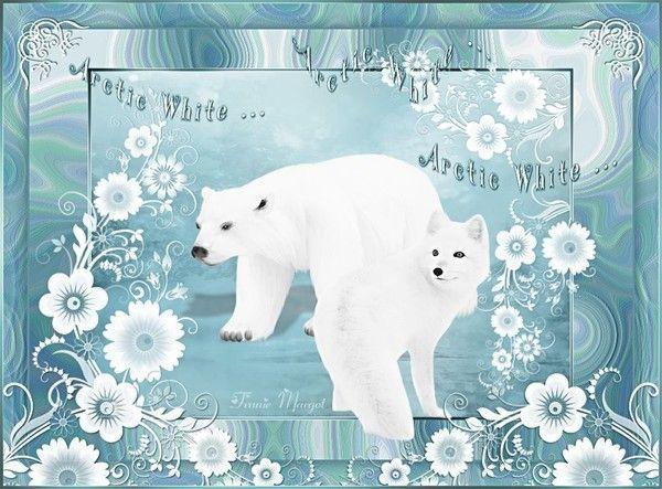 Arctic White traduit par CLOCLO